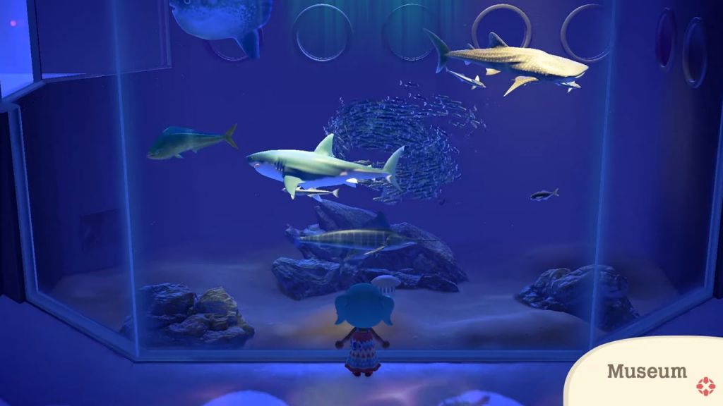 Squali nel museo su Animal Crossing New Horizons