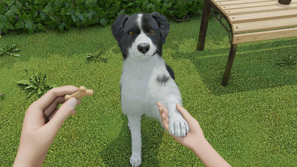 Un Border Collie educato su Dog Trainer