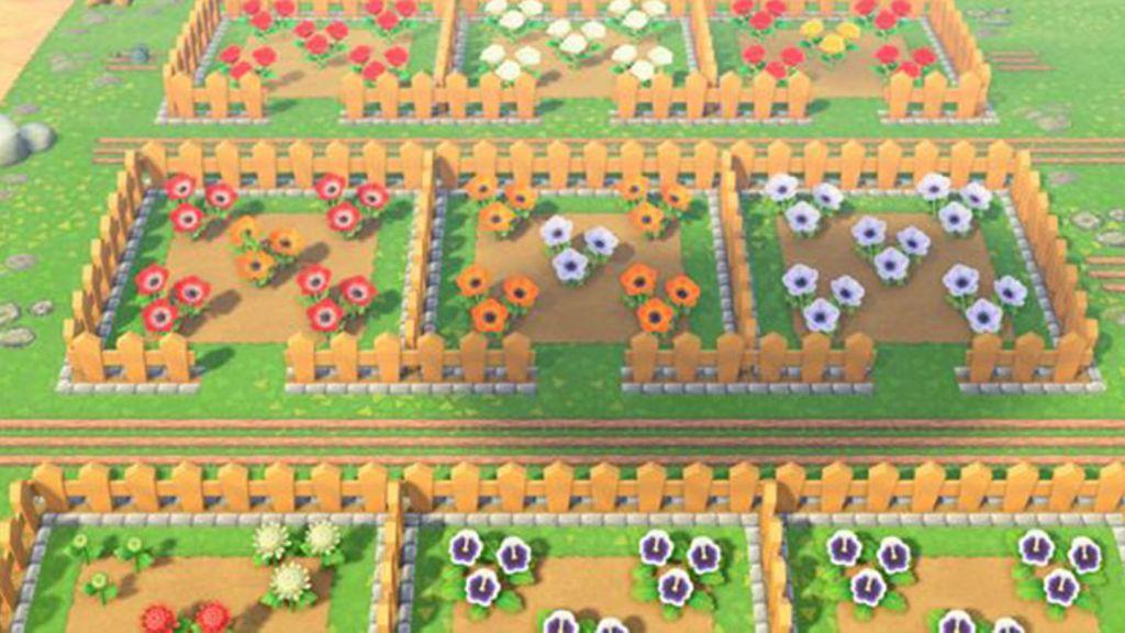 Immagine di esempio della disposizione a scacchiera dei fiori in Animal Crossing New Horizons per l'ibridazione